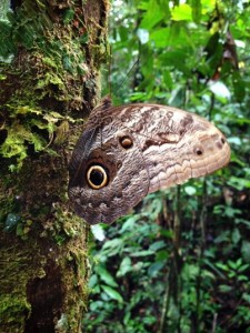 Amazon moth ©Mona Helen Preuss